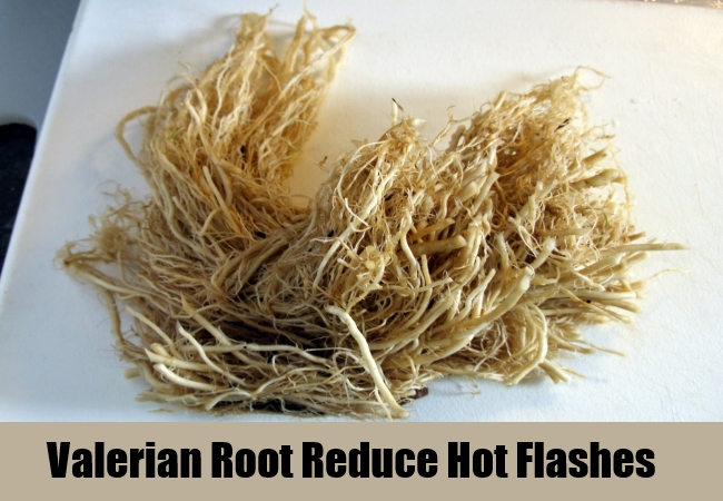 Valerian Root Reduce Hot Flashes