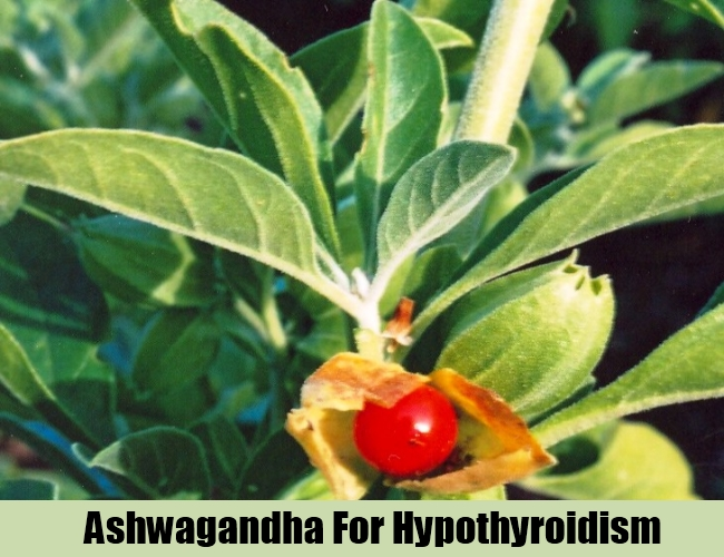 Ashwagandha For Hypothyroidism