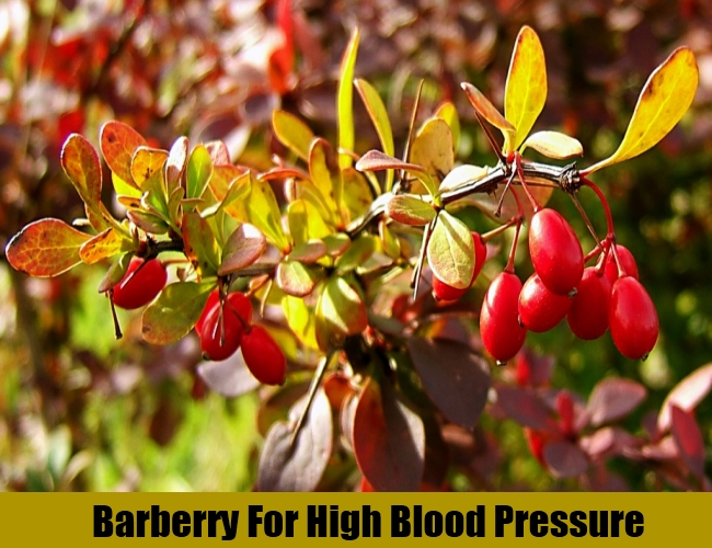 Barberry For High Blood Pressure