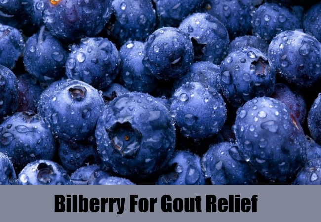 Bilberry For Gout Relief