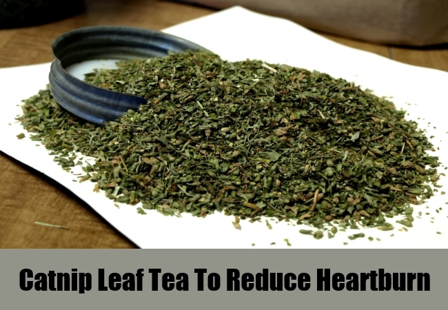 Catnip Leaf Tea To Reduce Heartburn