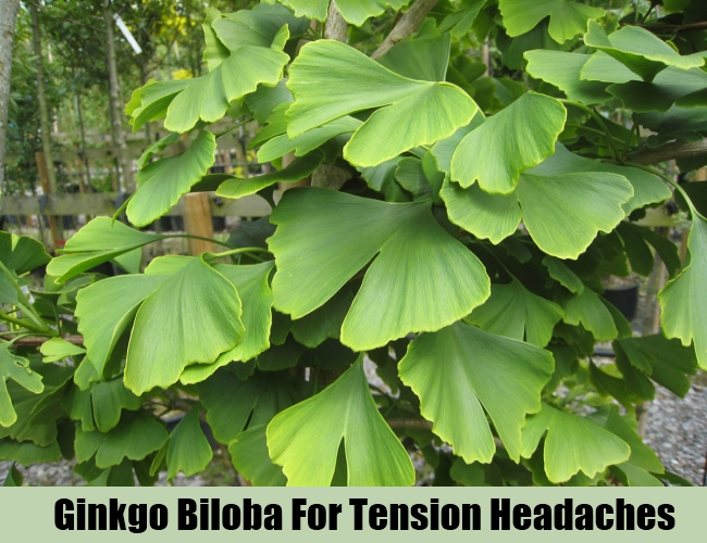 Ginkgo Biloba For Tension Headaches