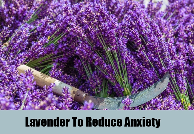 Lavender To Reduce Anxiety