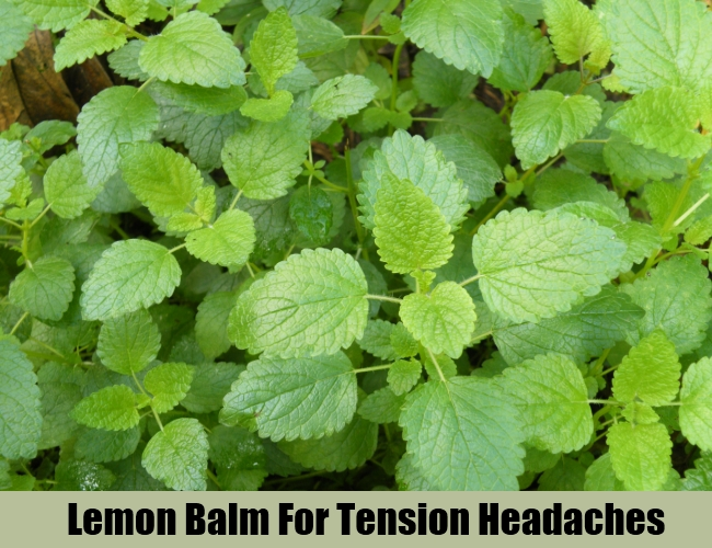 Lemon Balm For Tension Headaches