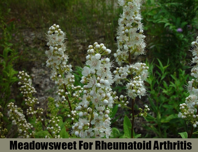 Meadowsweet For Rheumatoid Arthritis