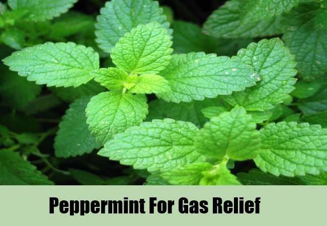 Peppermint For Gas