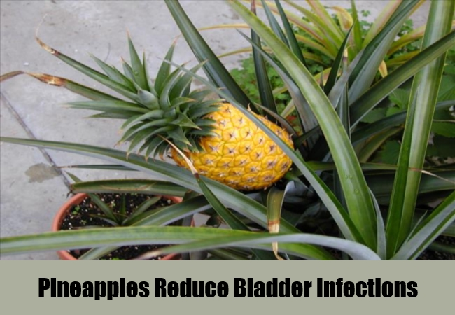 Pineapples Reduce Bladder Infections