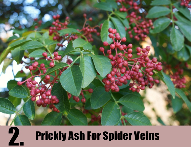 Prickly Ash For Spider Veins