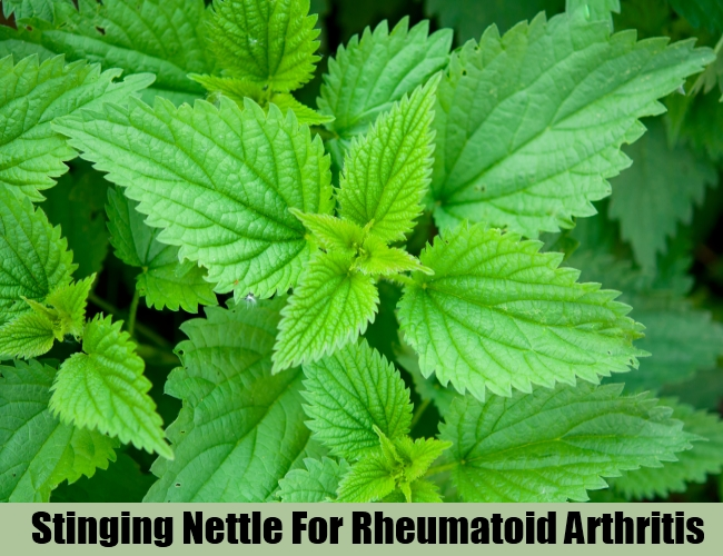 Stinging Nettle For Rheumatoid Arthritis