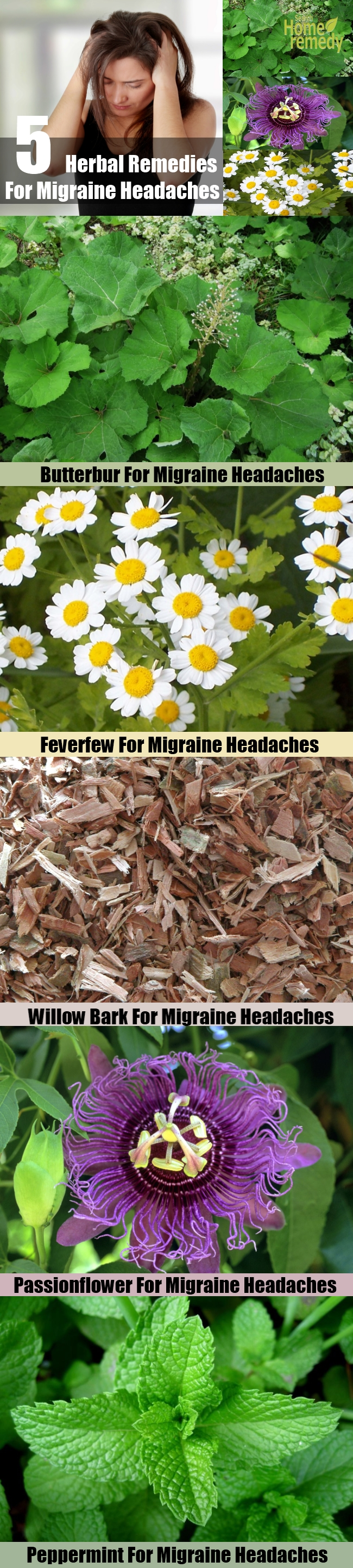 5 Herbal Remedies For Migraine Headaches