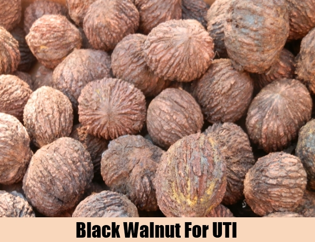 Black Walnut For UTI