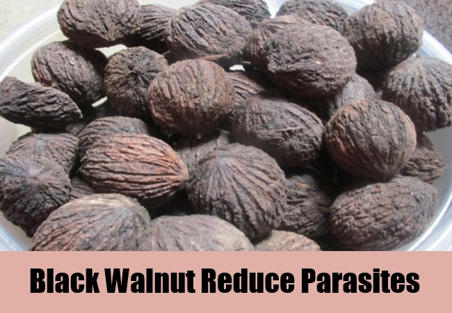 Black Walnut Reduce Parasites
