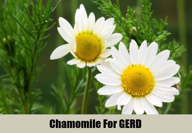 Chamomile For GERD