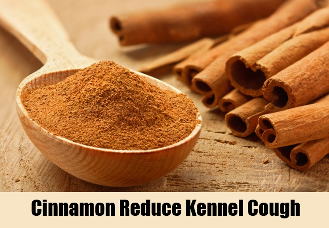 Cinnamon Reduce Kennel Cough