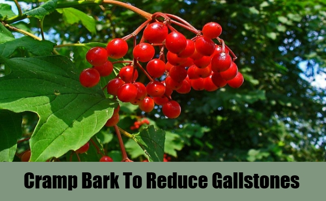 Cramp Bark To Reduce Gallstones