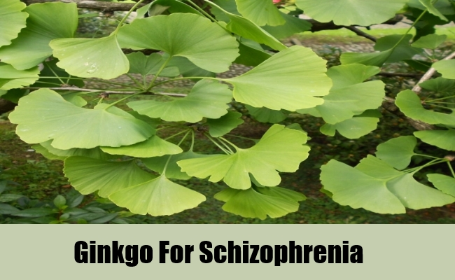 Ginkgo For Schizophrenia