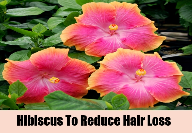 Hibiscus To Reduce Hair Loss