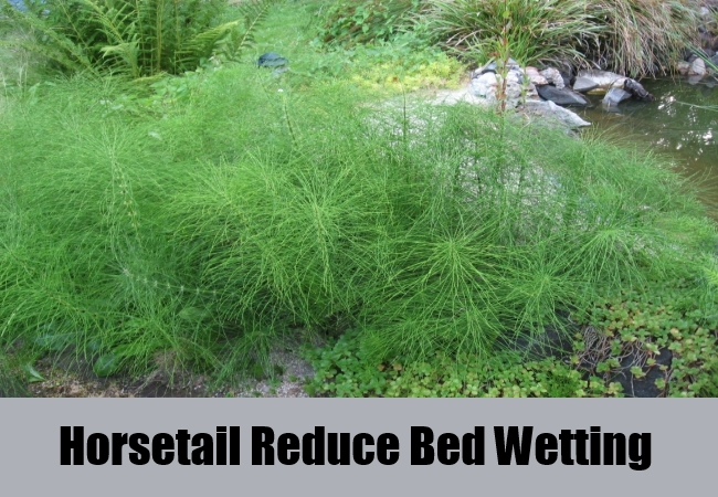 Horsetail Reduce Bed Wetting