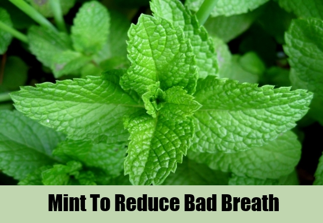 Mint To Reduce Bad Breath