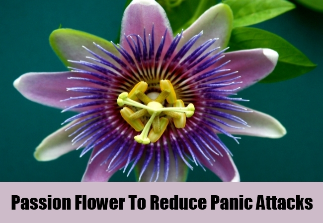 Passion Flower To Reduce Panic Attacks