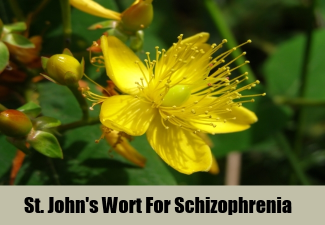 St. John's Wort For Schizophrenia