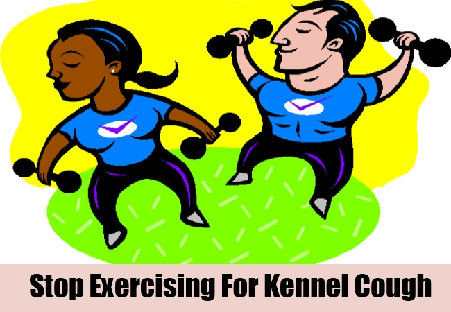 Stop Exercising For Kennel Cough