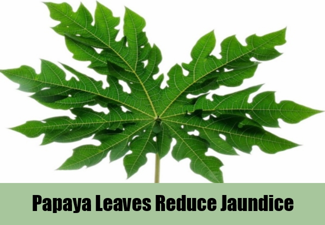 Papaya Leaves Reduce Jaundice