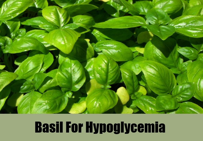 Basil For Hypoglycemia