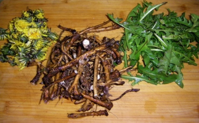 Dandelion Root And Leaf