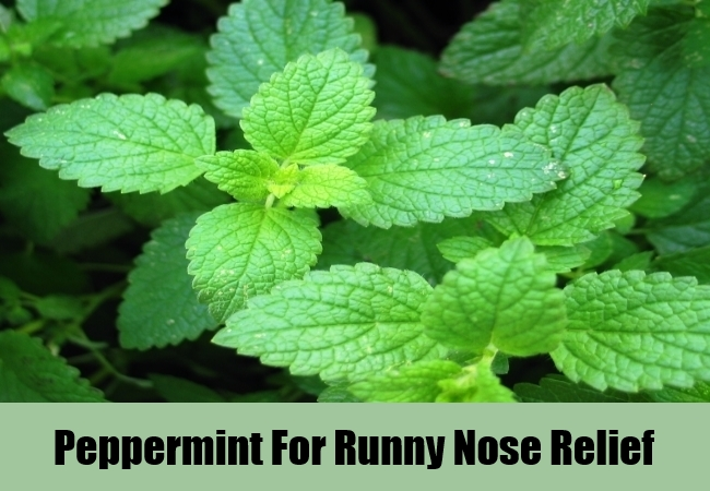 Peppermint For Runny Nose Relief