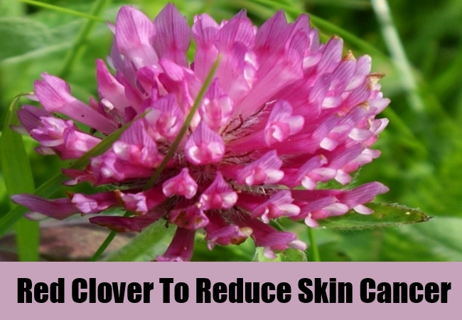 Red Clover To Reduce Skin Cancer