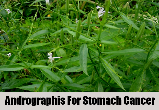 Andrographis For Stomach Cancer