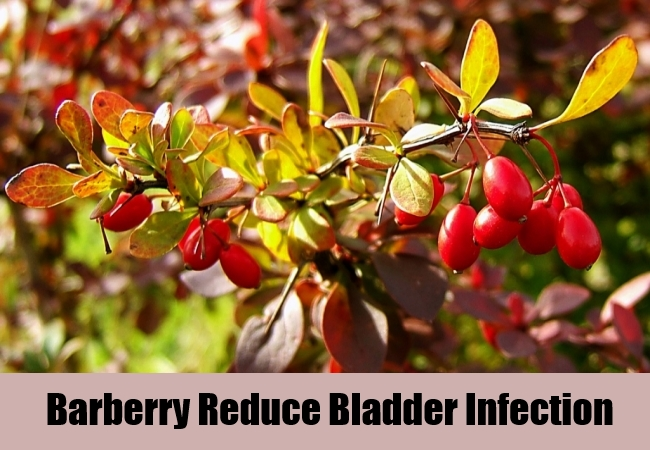 Barberry Reduce Bladder Infection