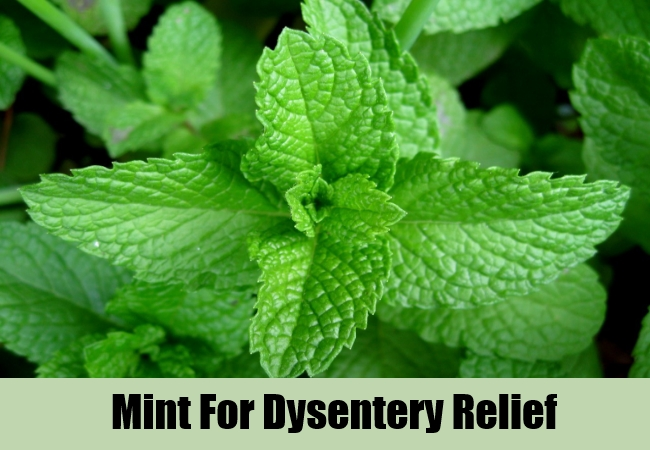 Mint For Dysentery Relief