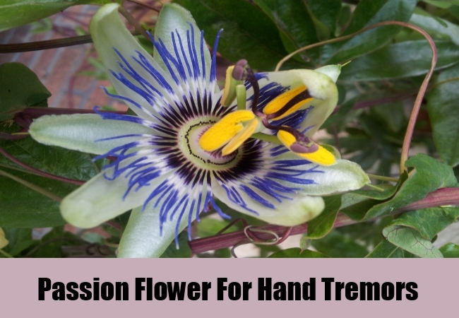 Passion Flower For Hand Tremors