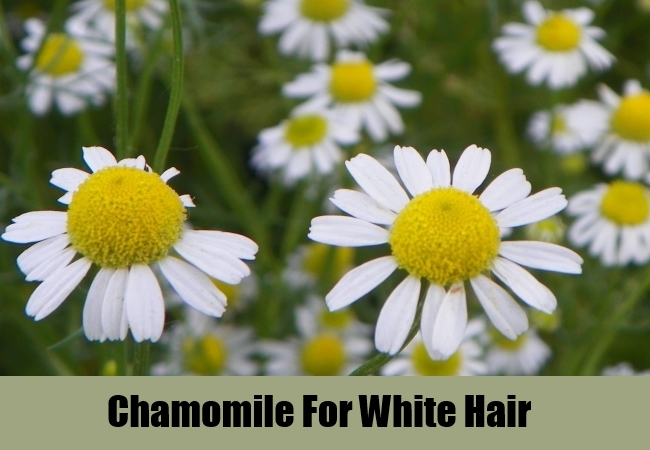 Chamomile For White Hair