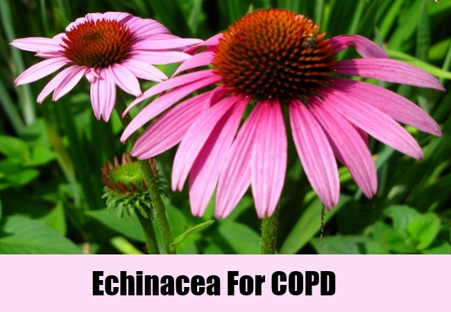 Echinacea For COPD