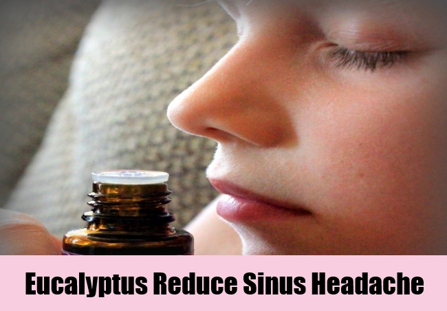 Eucalyptus Reduce Sinus Headache