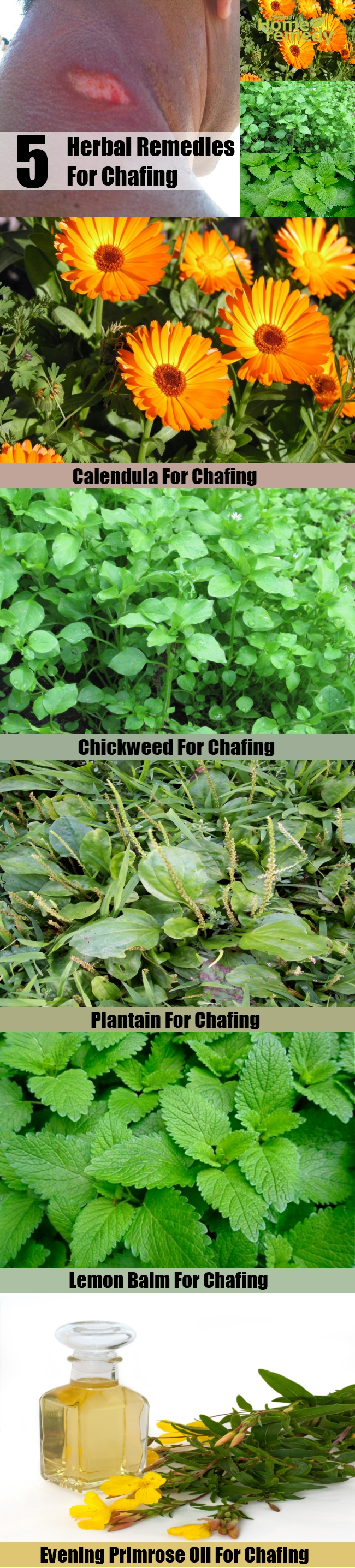 5 Useful Herbal Remedies For Chafing