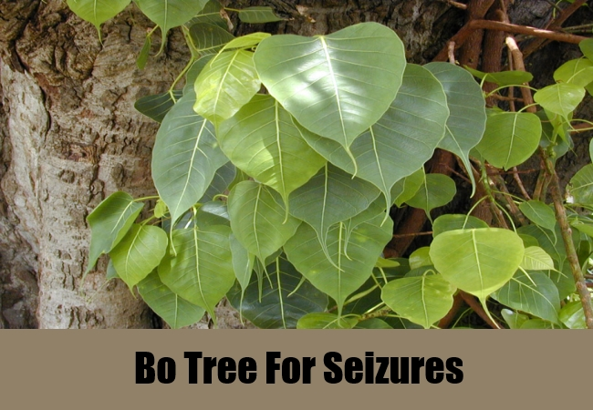 Bo Tree For Seizures