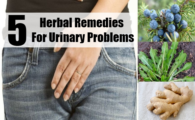 Herbal Remedies For Urinary Problems