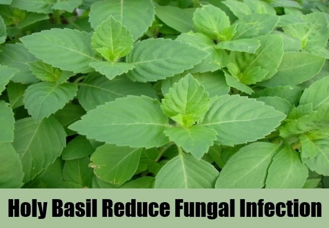 Holy Basil Reduce Fungal Infection