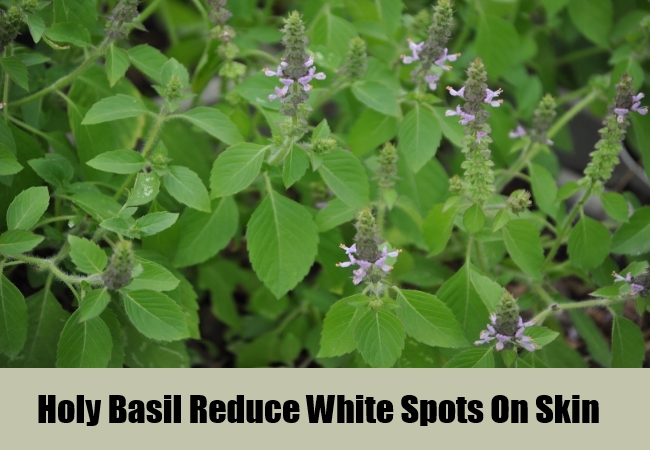 Holy Basil Reduce White Spots On Skin