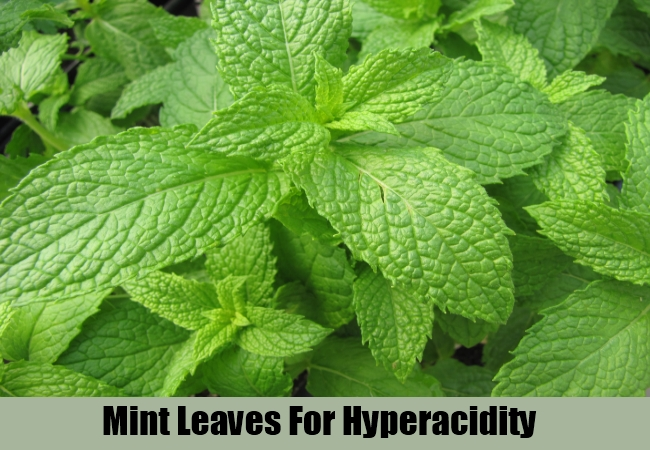 Mint Leaves For Hyperacidity