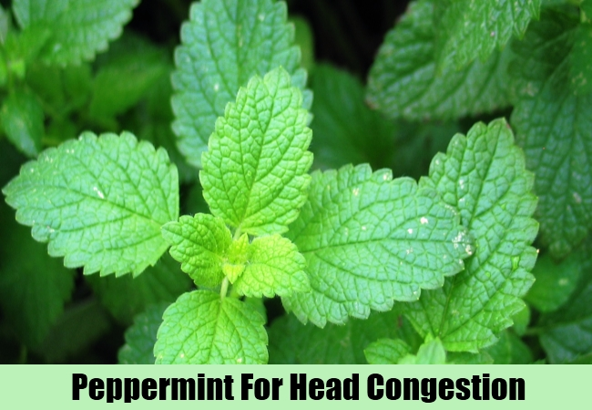 Peppermint For Head Congestion