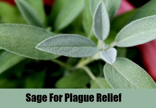 Sage For Plague Relief