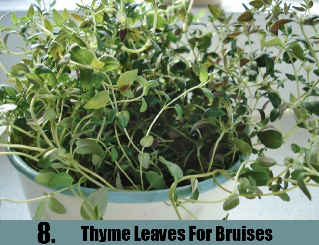 Thyme Leaves For Bruises