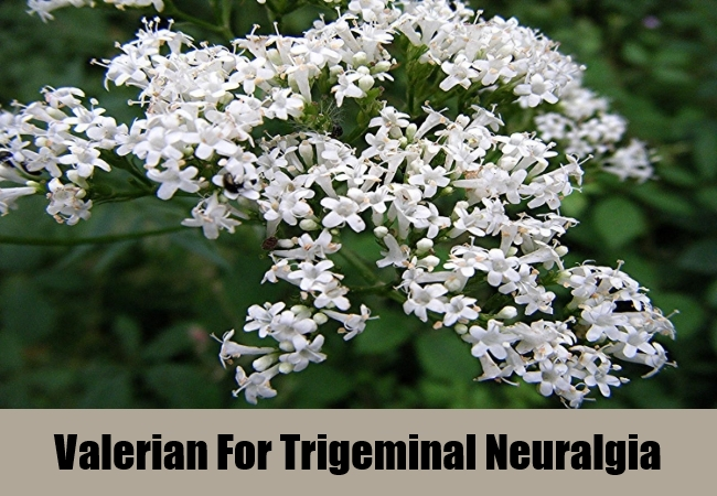 Valerian For Trigeminal Neuralgia