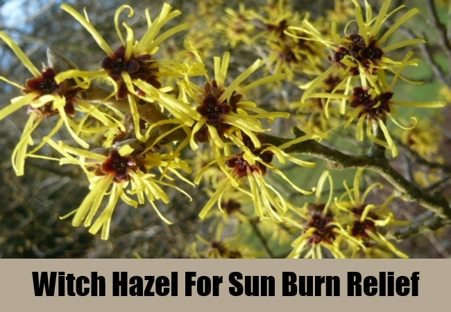 Witch Hazel For Sun Burn Relief