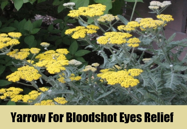 Yarrow For Bloodshot Eyes Relief